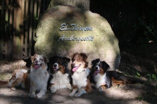 El Thayeba und Hunde